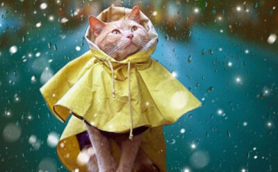 Погода в Україні: подекуди дощитиме та пройдуть грози